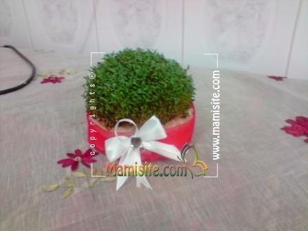 آموزش روش های سبز کردن سبزه عید با انواع بذرها+ عکس مدل سبزه